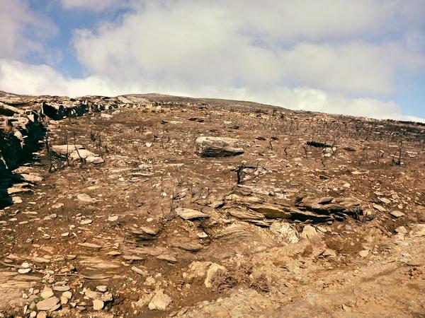 Εικόνες σαν και αυτή θα είναι το μέλλον της Άνδρου αν δεν ληφθούν άμεσα μέτρα (Πηγή: Ηλίας Τζηρίτης, WWF Ελλάς).