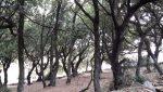 Oak trees_Vouni
