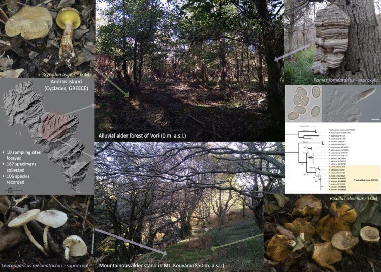 Τα μανιτάρια της Άνδρου αποκαλύπτουν δάση σκλήθρου