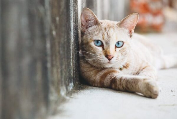Τα αδέσποτα ζώα συντροφιάς εντάσσονται στο πρόγραμμα ΦΙΛΟΔΗΜΟΣ ΙΙ