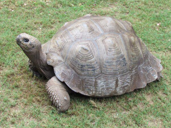 Δρόμος πυρασφάλειας στο Συνετί. Με ρυθμούς χελώνας...