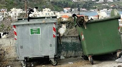 Οι αδέσποτες γάτες στο νησί μας