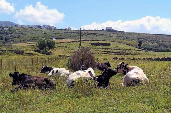 Διαχειριστικά σχέδια βόσκησης καταρτίζει ΠΝΑ και υπουργείο Αγροτικής Ανάπτυξης
