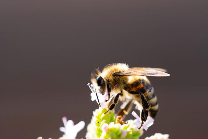 Σεμινάρια μελισσοκομίας από την Ανδρος Κοιν.Σ.εΠ