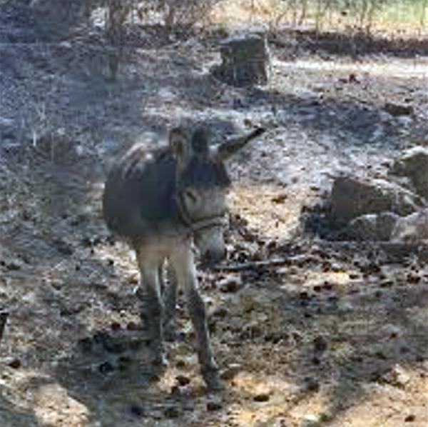 Δήμος Άνδρου: Συνεχίζεται η προσφορά στις πυρόπληκτες περιοχές
